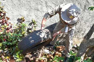 Paraguay en alerta ante aumento de casos de dengue en las Américas
