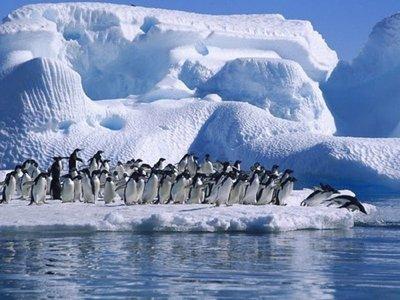 WWF pide una red de reservas marinas en la Antártida