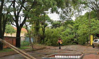 Árboles y columnas bloquean calle en CDE