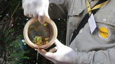 Advierten sobre riesgos de aumento de casos de dengue en todo el país