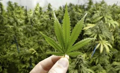 Marito firmó Decreto que legaliza y reglamenta producción del cannabis