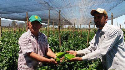 Pequeño productor ejemplo de producción hortícola en San Pedro