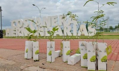 Campaña Enarbolate entregará 10.000 plantines