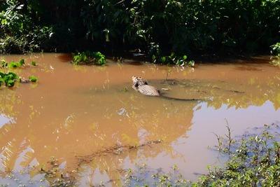 Piden ayuda a Itaipu para proteger vida silvestre en el Lago de la República