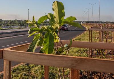 Los nuevos árboles en la Costanera formarán un corredor verde