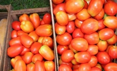 HOY / Ferias de tomates para incentivar el consumo de productos nacionales