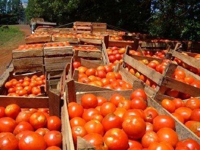 Productores inician comercialización de 20.000 kilos de tomate