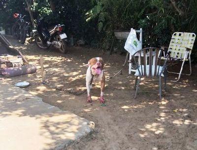 Perro de raza pitbull ataca a mujer en Pilar