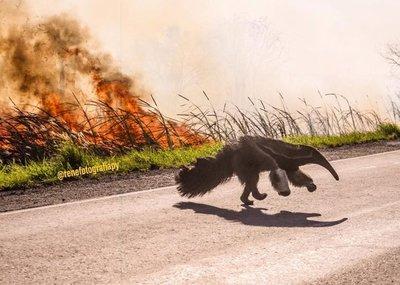 Las desgarradoras imágenes del Chaco quemándose que se viralizaron