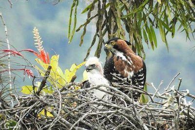 Los protectores de las aves guardianas del cielo