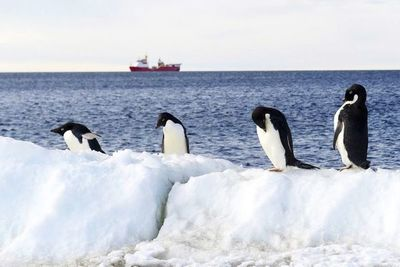 Fracasa de nuevo la iniciativa para crear santuarios marinos en la Antártida