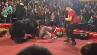 Captan momento en que oso ataca a entrenador en circo