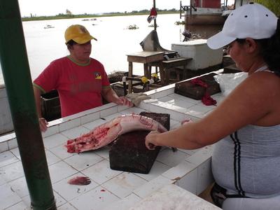 Este lunes inicia la veda pesquera con millonarias multas para infractores