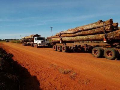 Rollo-tráfico: anuncian control estricto en las rutas ante deforestación progresiva