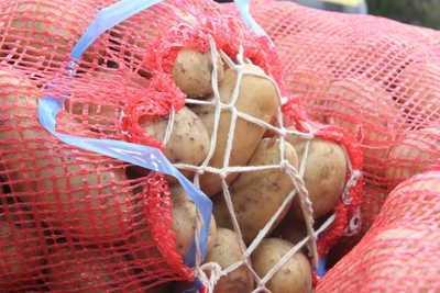 Productores de Paraguarí reciben fondos para envasar papa y cebolla