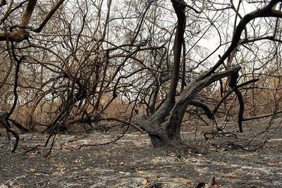 Tras los incendios, Salud está en alerta por un posible ingreso de fiebre amarilla