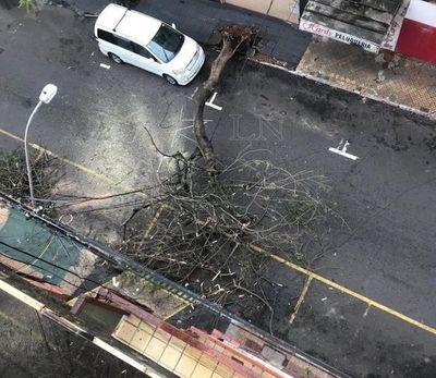 Tormenta dejó 65 líneas de media tensión sin servicio