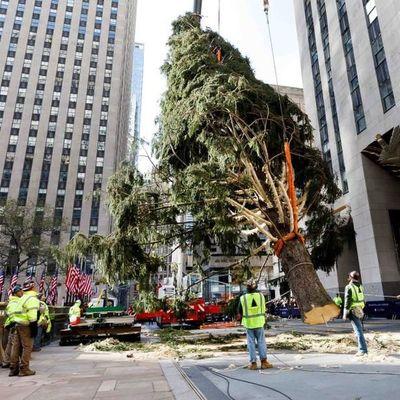 Neoyorquinos reciben con entusiasmo al famoso árbol del Rokefeller Center
