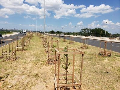 Tras temporal, reforzarán protectores de árboles en la Costanera Norte