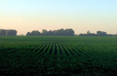 Productores aguardan más lluvias para sembrar