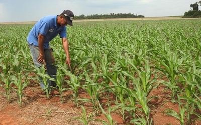 Paraguay crecerá 4% en 2020, vaticina el FMI