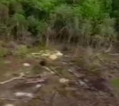 Reserva Morombi es destruida por narcotraficantes