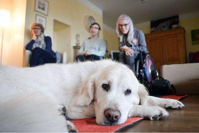 Perros de asistencia, ayudantes para el día a día