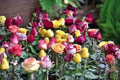 Secretos de las rosas
