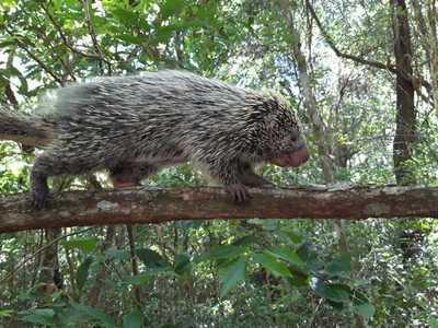 Animales silvestres son rescatados en zona de Caacupé