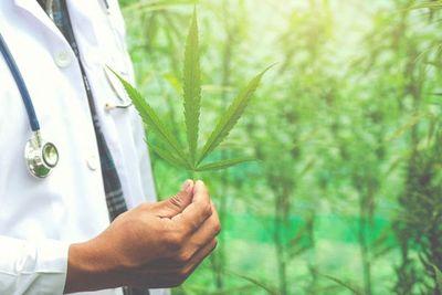 La UNA abre debate sobre uso medicinal del cannabis