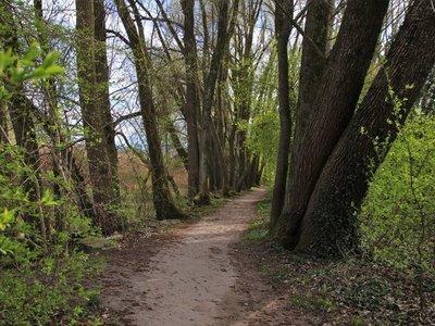 Los espacios verdes evitan muertes prematuras en las ciudades
