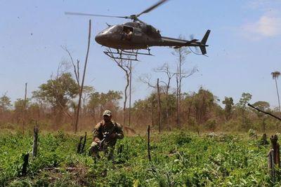Operativo anuló 500 toneladas de marihuana en Amambay