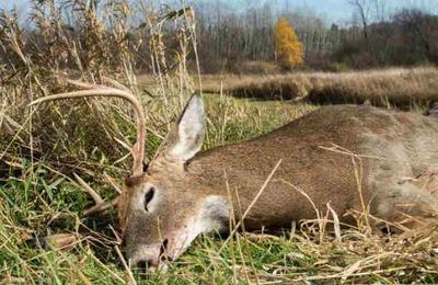 Encuentran muerto a un ciervo con siete kilos de basura en su estómago