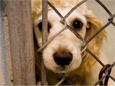 Declaran crueldad hacia los animales como delito federal en EEUU