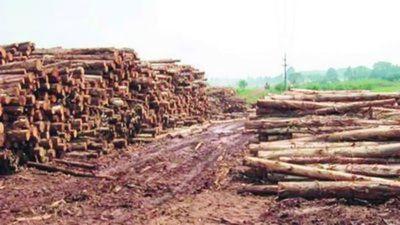 Industria forestal se redujo un 40%