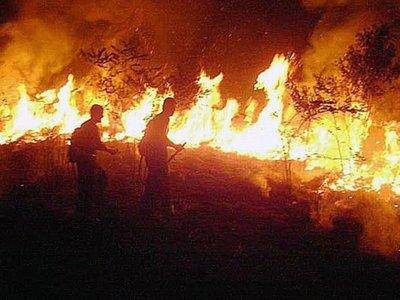 Arrestan en Brasil a voluntarios que combatieron el fuego en la Amazonía