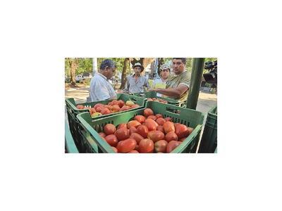 Precio del tomate se encarece 30% en las distribuidoras