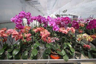 Taiwán alienta a Paraguay a liderar el rubro orquídea