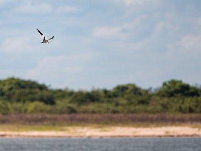Paraguay será una atalaya de biodiversidad en la Feria de Aves de Suramérica