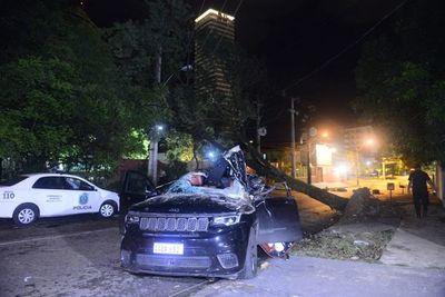 Árbol caído causó tres accidentes en menos de cinco horas