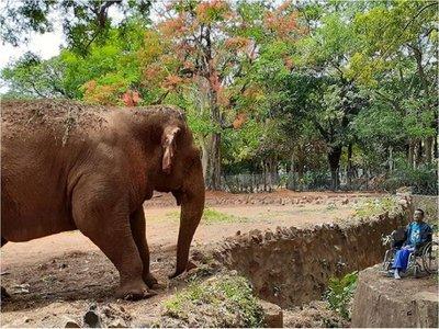 El emotivo reencuentro entre la elefanta Maia y Don Ta'ito