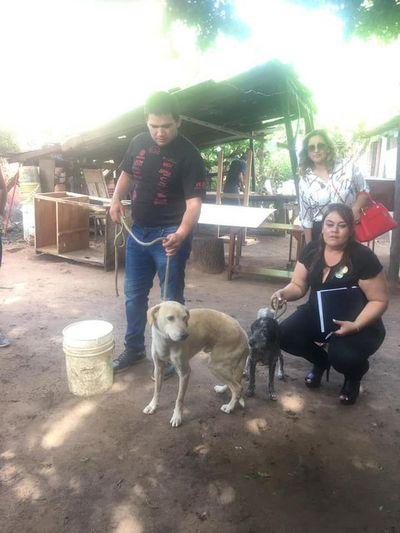 Fiscalía rescata a perros en grave estado de salud tras denuncia ciudadana