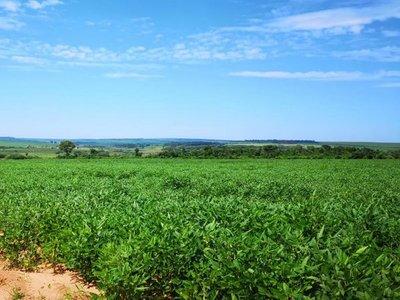 Tierras cultivadas aumentaron casi 175.000  hectáreas en Paraguay