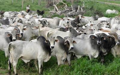 Más de 1,6 millones de animales faenados en lo que va del año