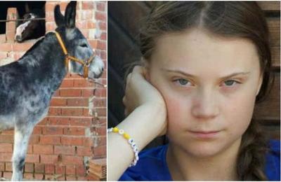 Vecinos de un pueblo español le ofrecen un burro a Greta Thunberg para llegar a Madrid