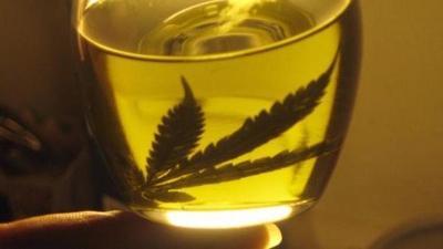 Cuestionan a Salud y Senad por mal manejo para licencias de cannabis