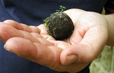 Lanzarán 140.000 bombas de semillas desde un avión para reforestar Ybytyruzú