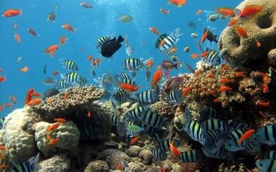 """EE.UU. emprende """"urgente"""" recuperación de 7 arrecifes en los Cayos de Florida"""
