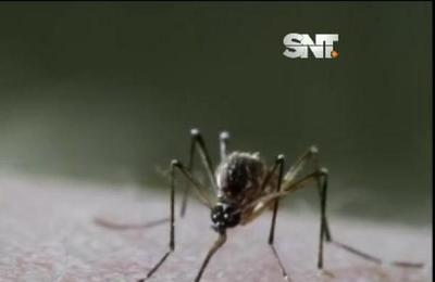 ¡Alerta! Esta puede ser la peor epidemia de dengue