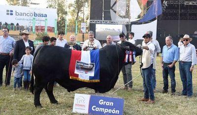 Toro Brangus paraguayo es campeón del mundo